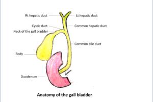 What to expect after Laparoscopic Gall Bladder removal surgery? (Laparoscopic Cholecystectomy)